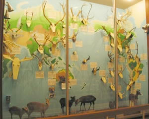 Antler display