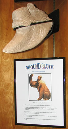 Ground sloth claw