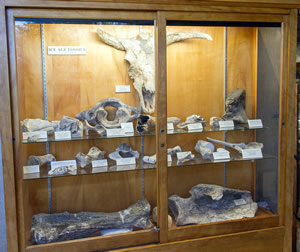 Local fossil display
