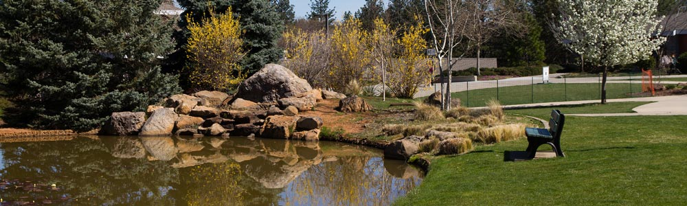 The Nevada County Campus pond with trees in bloom