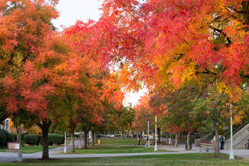Rocklin Campus in the fall