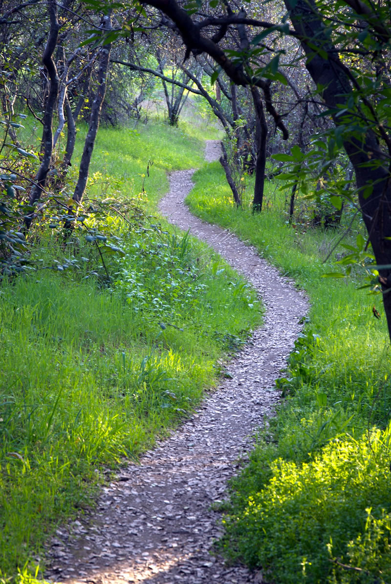 Sierra College Nature Area And Trail Outdoor Laboratory